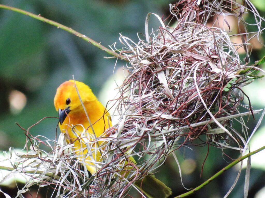 , Scripture Session – 02/28/21: Sins Swept, Return to Nest